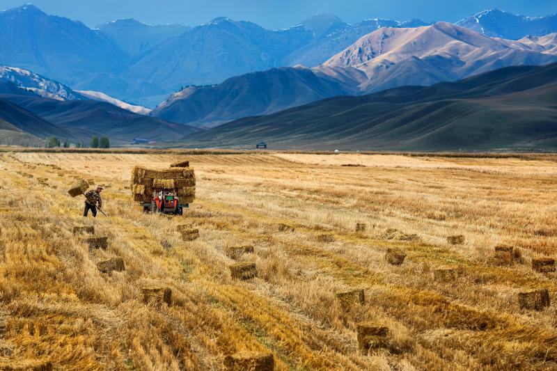 Farming near Yili, China, October 2015