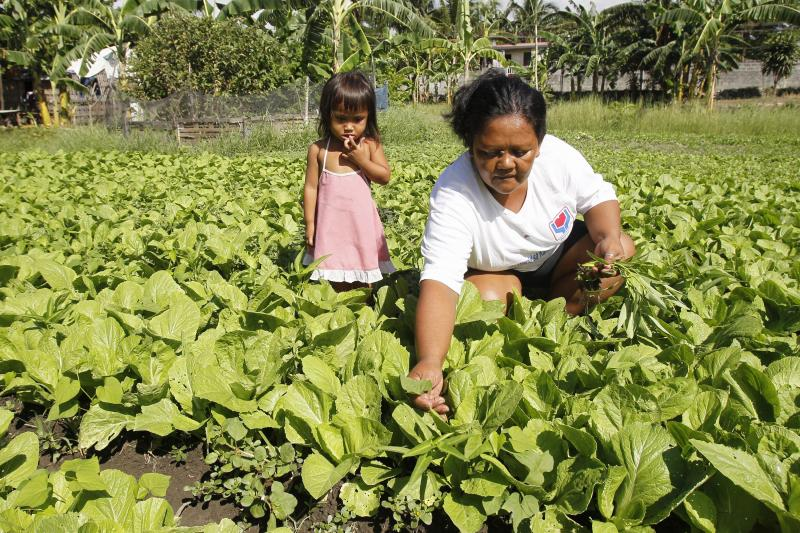 A recipient of a cash transfer program tends vegetables in her garden in the Philippines