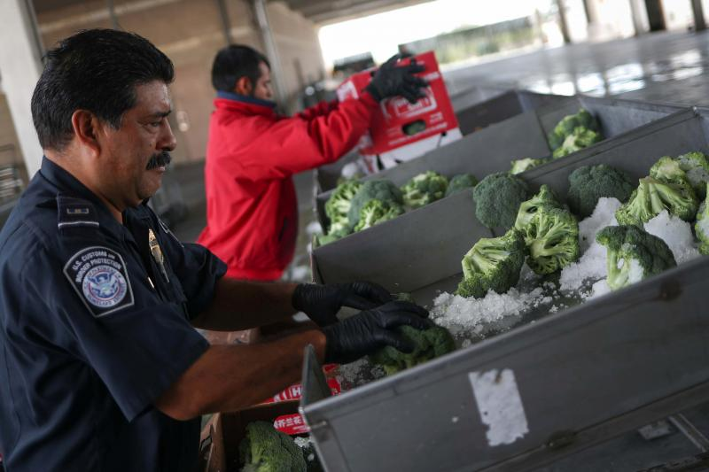 A U.S. Customs and Border Protection Agriculture specialist checks imported broccoli from Mexico in Pharr, Texas, October 2018
